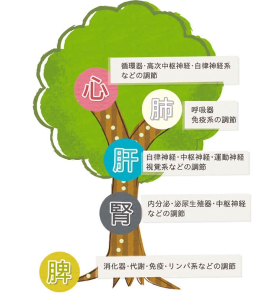 漢方の基本理念