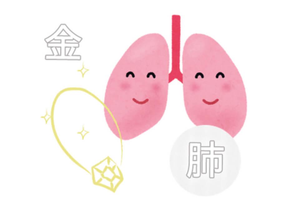 金=肺とは?