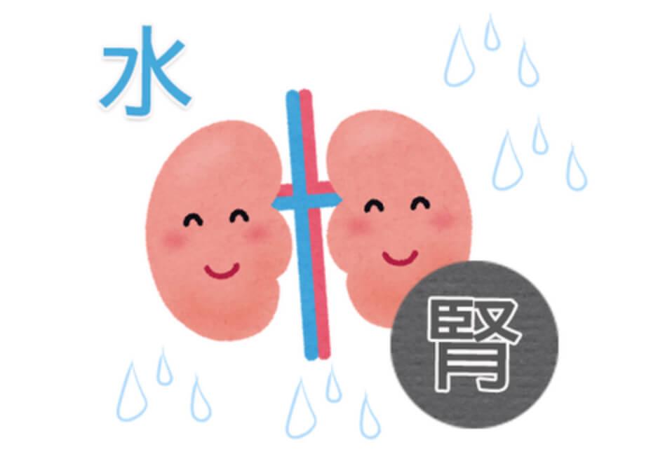 水=腎とは?